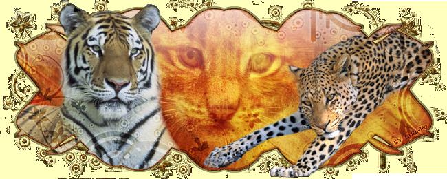 Cats Aventure I_logo