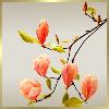 Theme Amitié / Mode/Zen I_folder_new_big