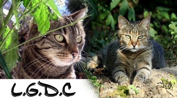 LES ARISTOCHATS Forum d'entraide pour les chats I_logo
